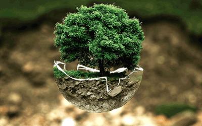 Réussir une campagne de sensibilisation en faveur de l'environnement: astuces et conseils